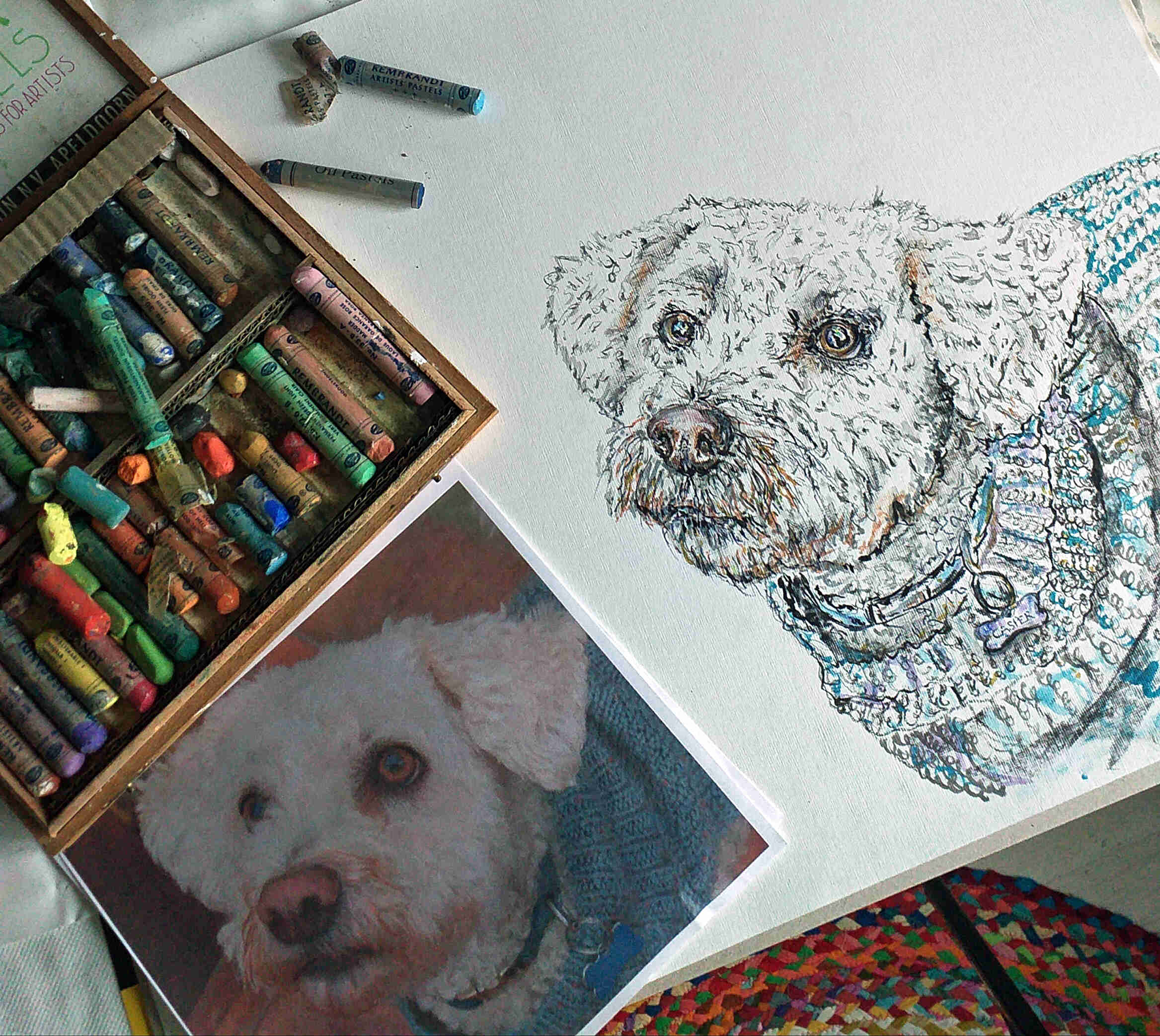 A work in progress picture of a bichon frise